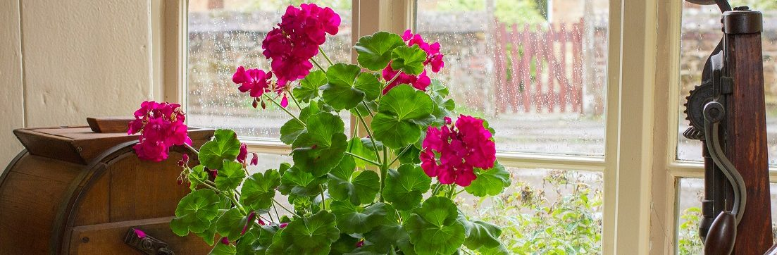 RC-windowsill-w-geraniums-resized-e1488227427600